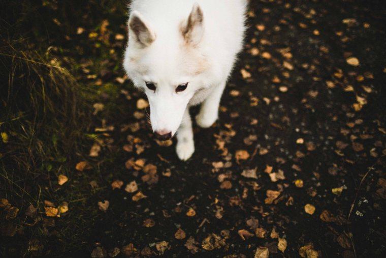 WilkeyFamily-©BBM2015-AnchorageLifestylePhotographer-28